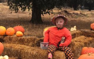 Annual Pumpkin Festival 2019