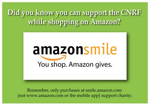 pop up-Amazon