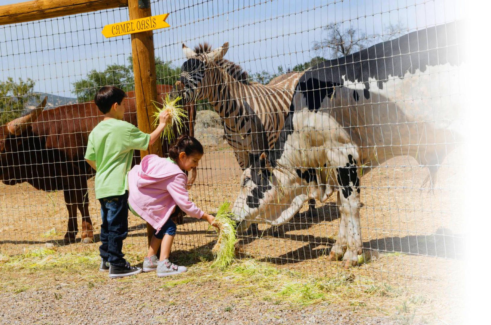 How Children's Nature Retreat Animals Can Help with Depression