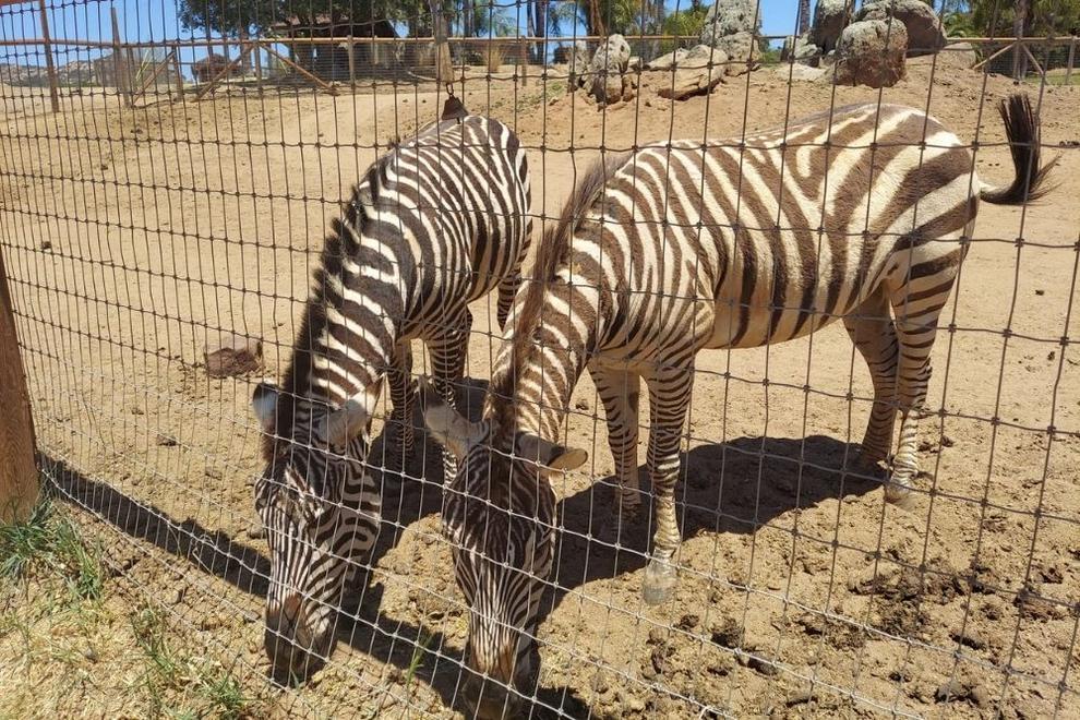Zebras at Children's Nature Retreat