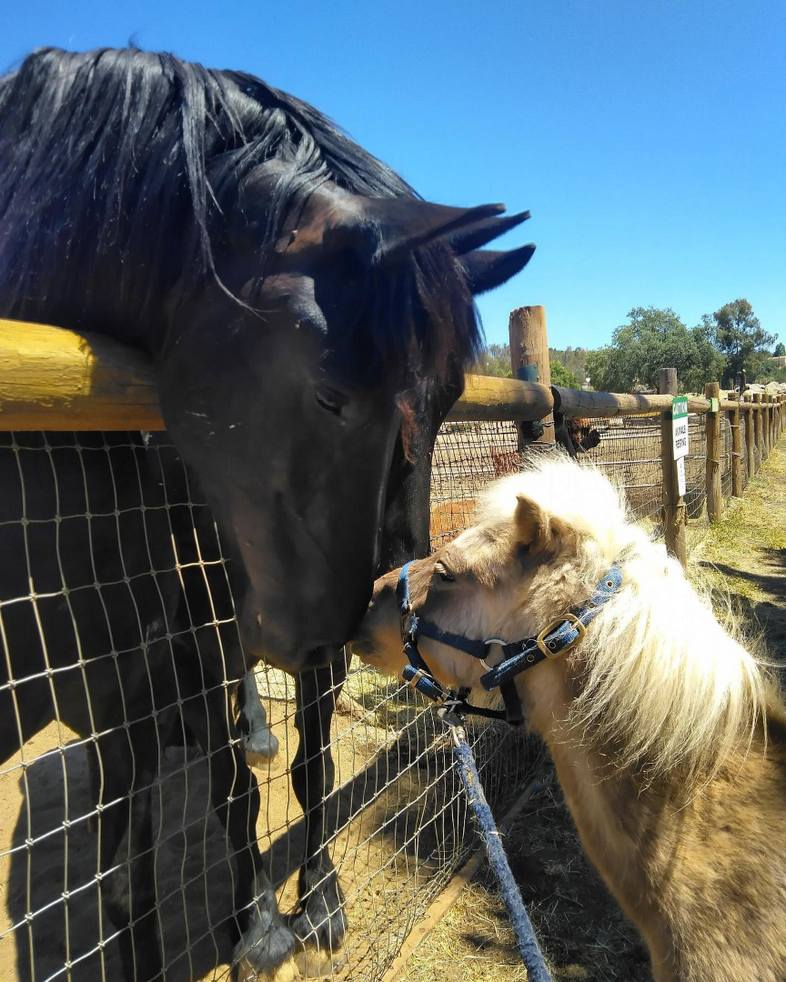 Horses at The Children's Nature Retreat