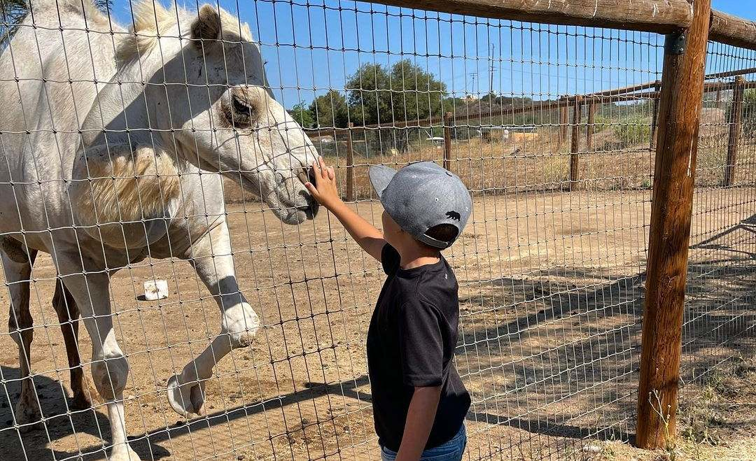 Kid petting camel at animal santuary (5 Educational Benefits of Animal Sanctuaries and Why Your Kids Should be Visiting)