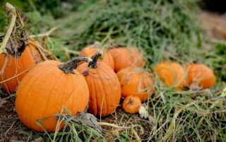 Celebrate Fall Season at Children's Nature Retreat