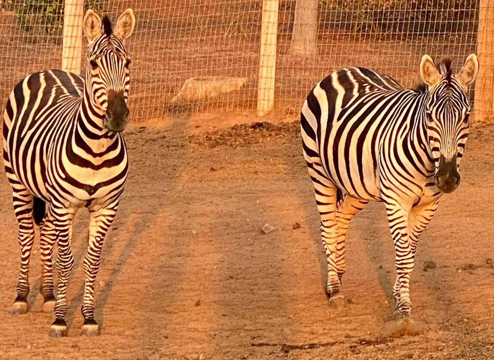 zibras at Children's Retreat